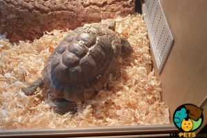 Tortoise Online Listings