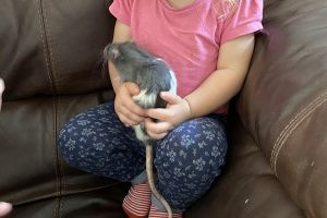 Rat for Rehoming