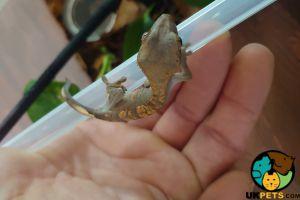 Gecko Online Listings