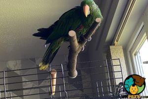 Parrot Birds Breed