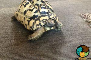 Tortoise Online Listings