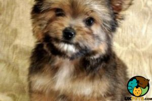 Mixed Breed Wanted in the UK