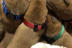 Dogue De Bordeaux For Sale in Lodon