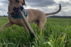 Mixed Breed For Stud in Great Britain