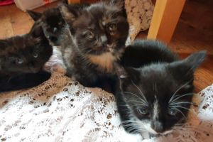 Mixed Breed For Sale in the UK