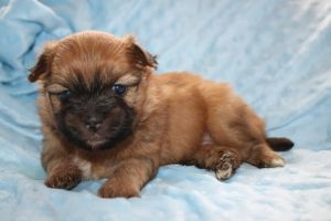 Mixed Breed For Sale in Lodon