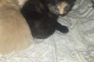 Mixed Breed For Sale