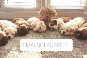 Malshi Online Listings
