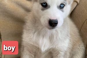 Mixed Breed Dogs Breed