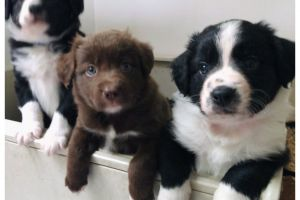 Available Mixed Breeds