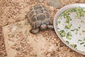 Tortoise Online Ad