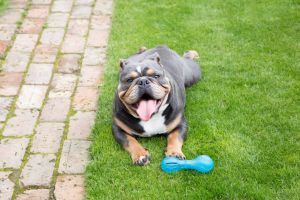 Bulldog Online Listings