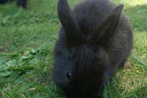 Mixed Breed Rabbits Breed