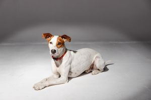 Mixed Breed For Adoption in Lodon