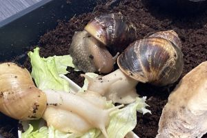 Available Snails