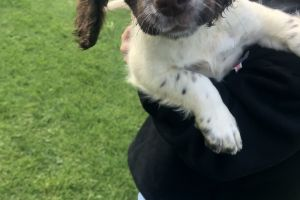 Sprockers for Rehoming