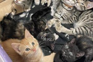Mixed Breed Cats Breed