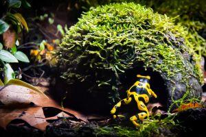 Frog Online Listings
