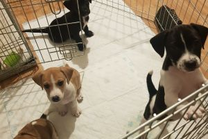 Mixed Breeds for Rehoming