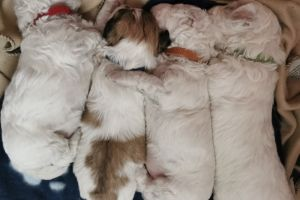 Mixed Breeds For Sale