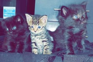 Cute Mixed Breed For Sale